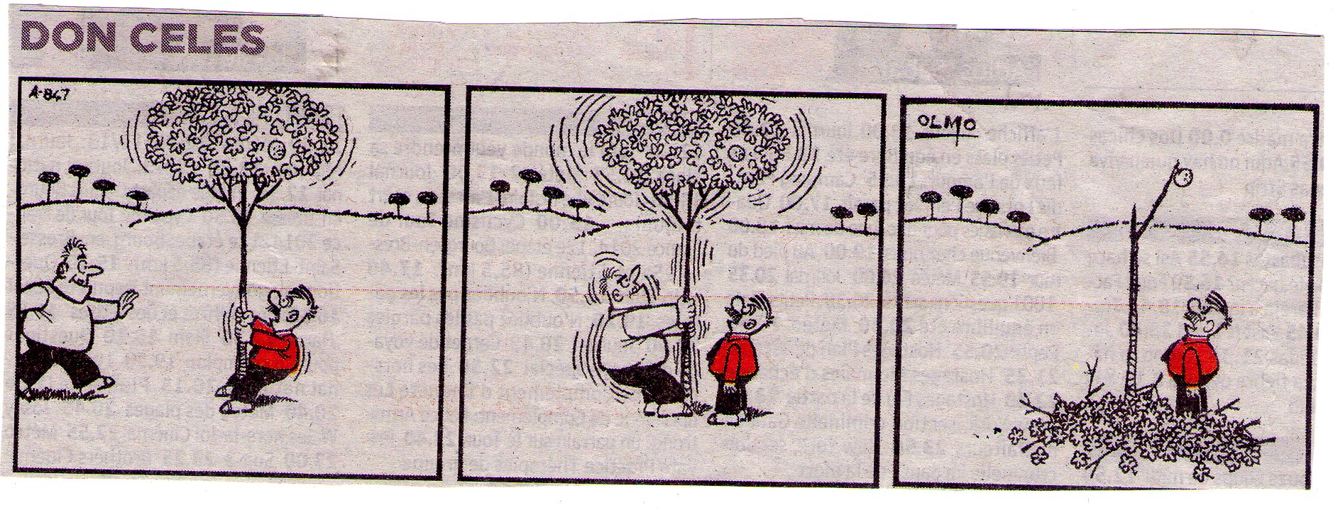 Don Celes es ayudado a zarandear un árbol